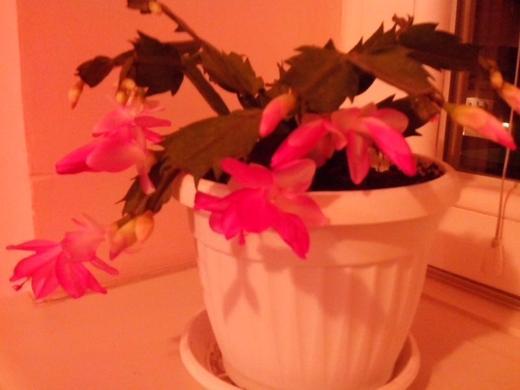 http://www.odlican.com/d/14576-2/kaktus.jpg