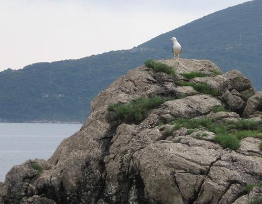 http://www.odlican.com/d/3735-4/Salgamos+al+volar_+querida+mia_.jpg