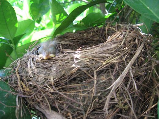 http://www.odlican.com/d/4555-4/vogel+nest.jpg