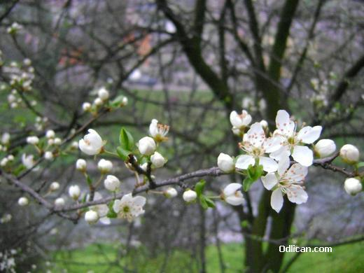 proleće danju